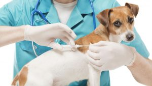 What is animal microchip and How does pet microchip work?