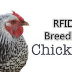 RFID technology helps chicken breeding industry to enhance brand influence