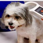 RFID Tracks Pet Remains Through Processing, Cremation