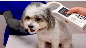 RFID Tracks Pet Remains Through Processing, Cremation
